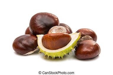 fruit chestnut