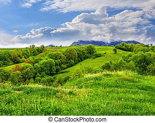 fruit garden on hillside meadow in mountain - fruit garden...