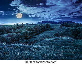 fruit garden on hillside meadow in mountain at night - fruit...