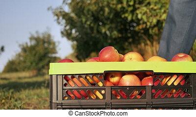 fruit-grower close up with a harvested crop - Closeup...