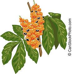 fruit, guarana, branche, leaves.