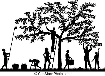 Editable vector silhouettes of a family harvesting apples from a tree with people and fruit as separate objects