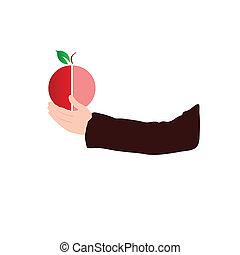 fruit in hand color vector