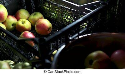 fruit., juteux, mûre