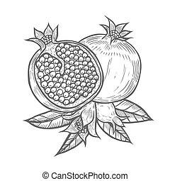 Gravure fleur vendange ou passion passiflora caerulea clipart vectoris recherchez - Grenade fruit dessin ...