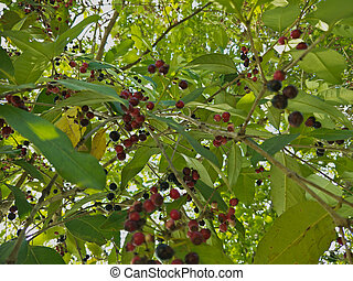 fruit of a tree on lakeside