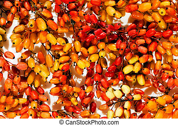 fruit of barberry