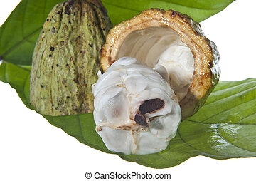 fruit of the cocoa tree on white background