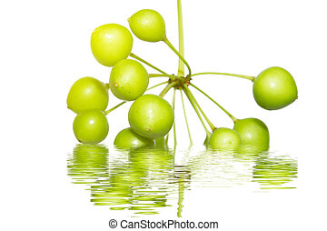 fruit on the water