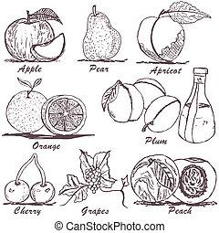 fruit sketch 1