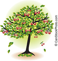 fruit tree with leafs and cherry isolated on white