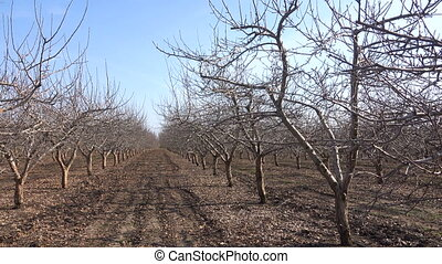 Fruit trees in the spring garden
