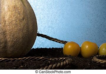 Fruit Tug of War: Plums Versus Rockmelon