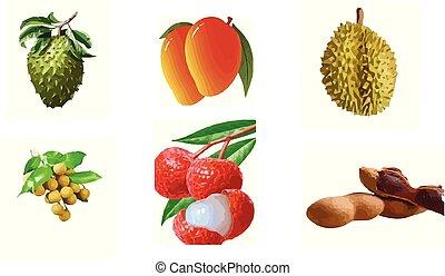fruit vector on white background