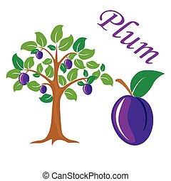 fruit., vektor, baum, pflaume, illustration.