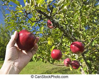 fruit, verboden