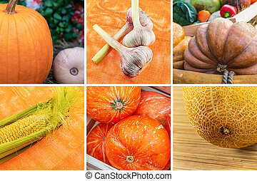 fruits, ail, assorti, citrouille, maïs, légumes, melon
