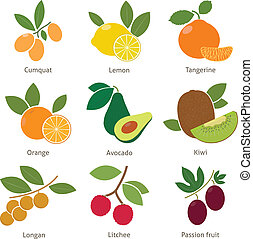 Fruits and berries. Set. Vector for your design