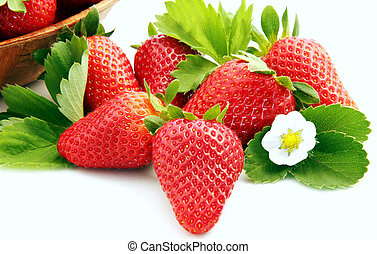 fruits and flowers of strawberry