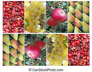 fruits collage, set
