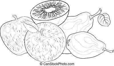 Fruits, contours