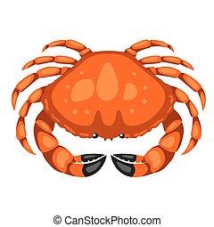 fruits mer, isolé, illustration, fond, blanc, crab., rouges