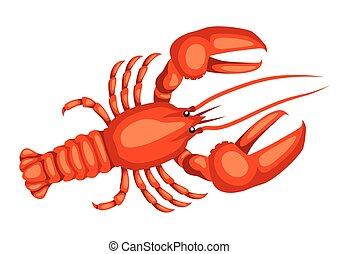 fruits mer, isolé, illustration, fond, blanc rouge, lobster.