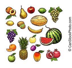 Fruits natural fresh organic sketch vector icons