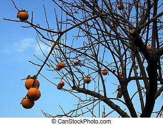 Fruits & no leaves