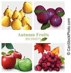 Fruits set Vector realistic. Pear, apple, grapes and plums