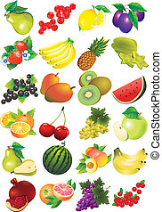 Fruits. - Various juicy fruits on a white background....