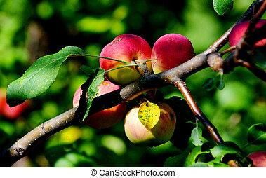 Fruits, vegetables, berry Siberia