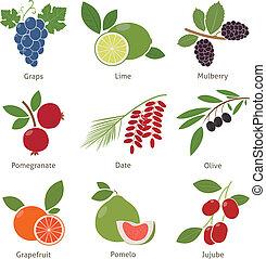 fruits, y, bayas