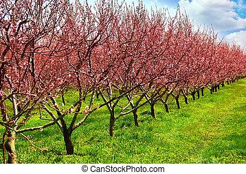frukt fruktträdgård