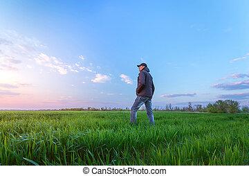frumento, giovane, campo, tramonto