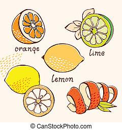 fruta cítrica, garabato, conjunto