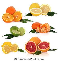 fruta, colección, fruta cítrica