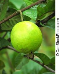 fruta, tropicais