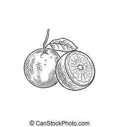 frutta esotica, schizzo, tropicale, arancia, icona