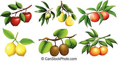 frutta, ramo, set