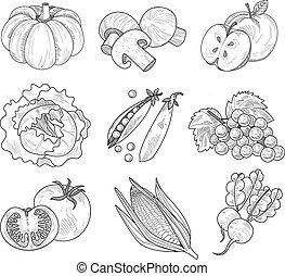 frutta, verdura, illustrazione, handdrawn, vettore
