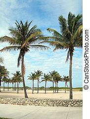 fußgänger, promenade, südlicher strand, miami, florida