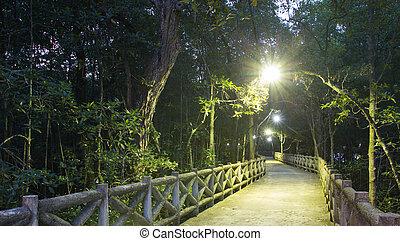 fußweg, mangrovenbaum, wald, nacht