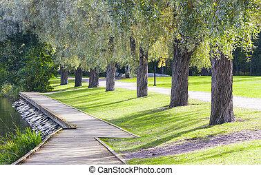 fußweg, und, bäume, gasse, in, sommer