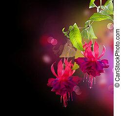 fuchsia, blomningen