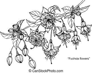 Fuchsia flower drawing.
