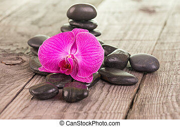 Fuchsia Moth orchid and stones - Fuchsia Moth orchid and...