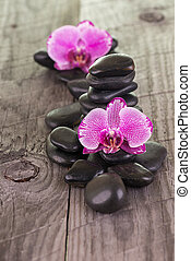 Moth orchids and black stones