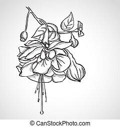 fucsia, flores, bosquejo