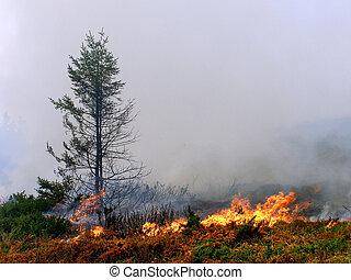 fuego, conífero, bosque